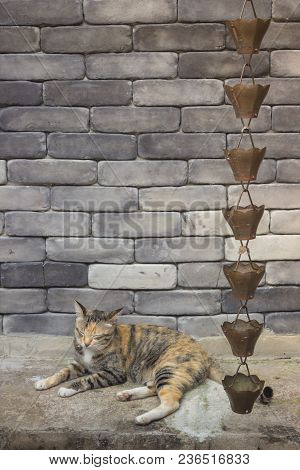 Cute Cat Relaxing In Front Of The Brick Wall, Stock Photo