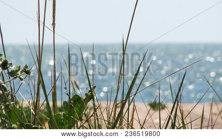 Green Grass On The Blurred Bright Background Of The Beach And The Blue Sea