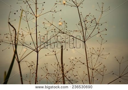 Dramatic And Gloomy Dry Grass Against A Background Of A Dull Sky