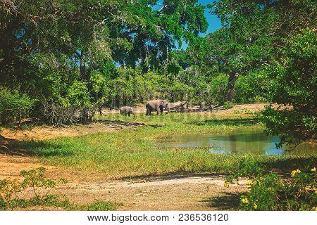 Yala National Park, Sri Lanka, Asia. Beautiful Lake And Old Trees. Forest In Sri Lanka, Big Stone Ro