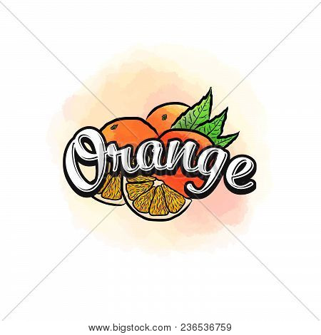 Orange Colorful Label Sign. Vector Drawing For Advertising. Fresh Design Of Colorful Fruits Made In