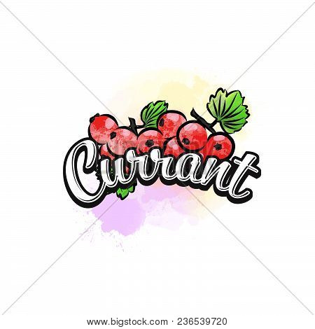Currant Colorful Label Sign. Vector Drawing For Advertising. Fresh Design Of Colorful Fruits Made In