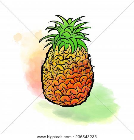 Colored Drawing Of Pineapple. Fresh Design Of Colorful Fruits Made In Watercolor Style. Modern Marke