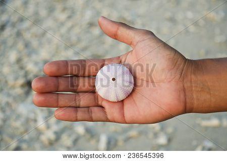 Open Human Hand Containing Fragile Seashell Above Rocky Beach In Gili Meno Indonesia