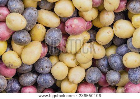 Pile Of Organic Mixed Medley Rainbow Potatoes Background