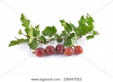 Colorful And Crisp Image Of Gooseberry With Twig On White