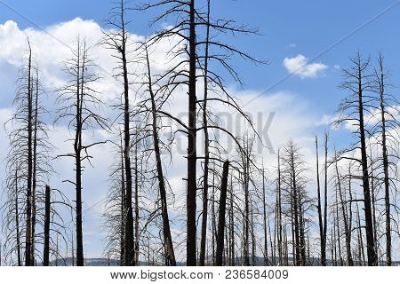 Beauty In The Destruction Of A Forest Fire