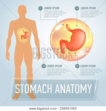 Infographic Poster With Stomach Illustration And Medical Icons. Realistic Vector Illustration
