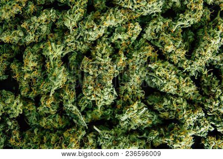 Background Of Flower Buds Cannabis, Marijuana, Weed Top View Copy Spase Close Up