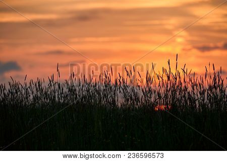 Evening Sun Shining On Wildflowers Or Weeds Growing In A Grassy Field. The Foreground Plants And Gra