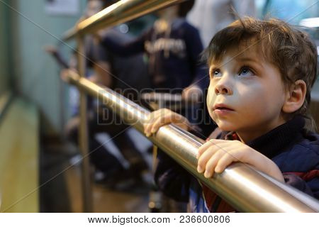 Boy In Zoo