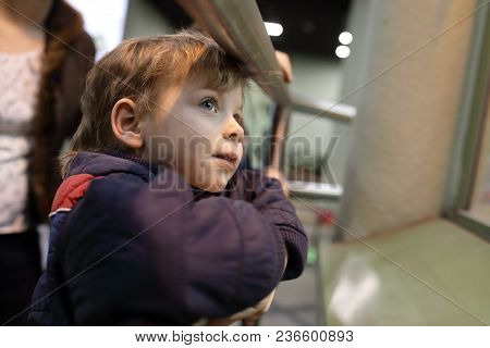 Interested Boy In Zoo