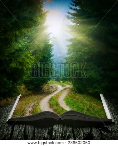 Way Through The Misty Forest On The Pages Of An Open Magical Book. Majestic Landscape. Nature And Ed