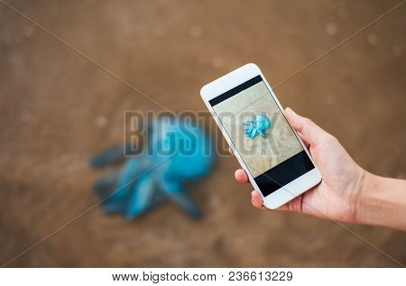 Taking Photo Of A Dead Jelly Fish On The Beach Washed By Waves