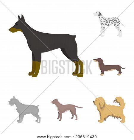 Dog Breeds Cartoon Icons In Set Collection For Design.dog Pet Vector Symbol Stock  Illustration.