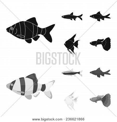 Angelfish, Common, Barbus, Neon.fish Set Collection Icons In Black, Monochrom Style Vector Symbol St