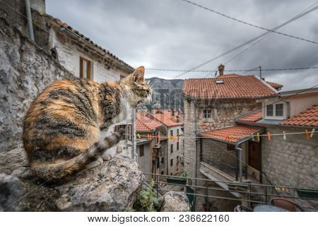 Screeching Cat Sitting On A Boulder In The Kotor Town, Montenegro