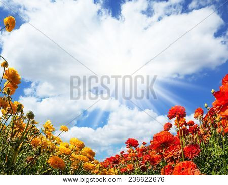 Magnificent field of bright flowering buttercups. Spring flowering. The picture is made by the fisheye lens. Lush cumulus clouds fly over the fields. Concept of ecological and rural tourism