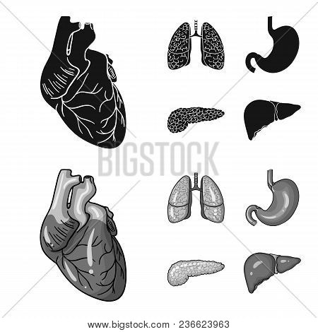 Heart, Lungs, Stomach, Pancreas. Human Organs Set Collection Icons In Black, Monochrom Style Vector