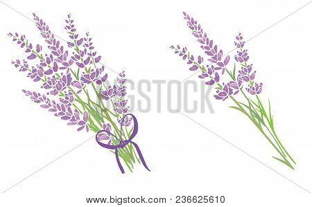 Set Of Two Purple Lavender Flowers Bouquets. Beautiful Violet Lavender Flowers Collection. Graphic D