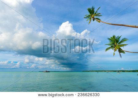 Bending coconut trees over tropical sea with storm at Ohoidertawun beach, Key island, Maluku, Indonesia
