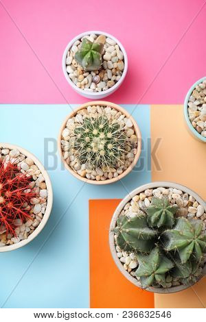 Beautiful Cacti On Color Background, Top View