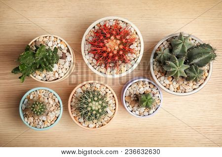 Beautiful Cacti On Wooden Background, Top View