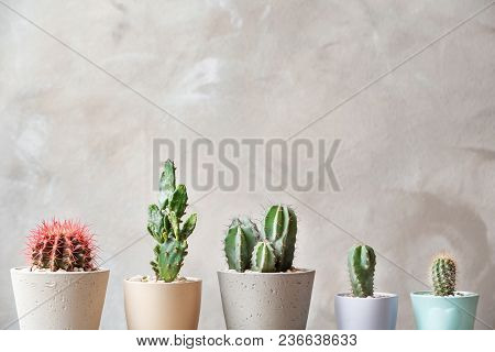 Beautiful Cactuses In Pots On Light Background