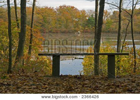 Bench On Pond