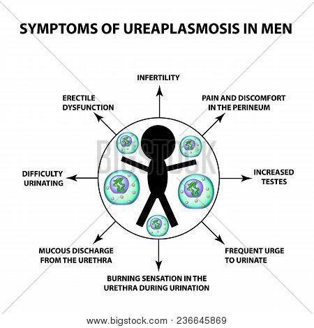 Symptoms Of Ureaplasmosis In Men. The Structure Of Ureaplasma. Infographics. Vector Illustration On