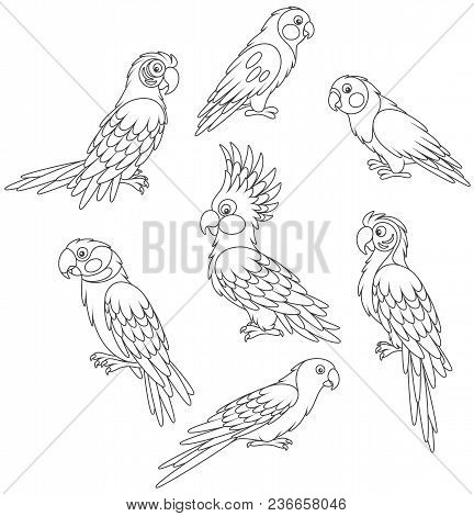 Collection Of Amusing Tropical Parrots, Black And White Vector Illustrations In A Cartoon Style For