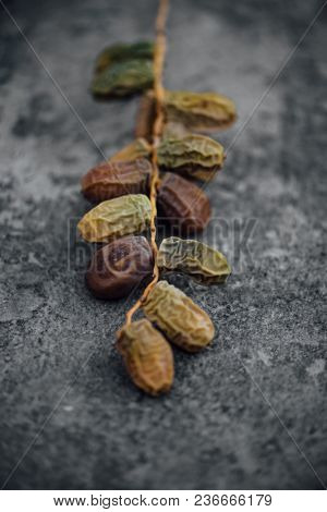 Sweet arabian bunch of ripening date fruits on grunge background. A sample of ripening and ageing dates.
