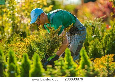 Caucasian Gardener Looking For A New Plants For Garden Project. Landscaping Theme.
