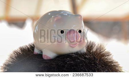 Piggy, Save Money Concept, Save Money Piggy Concept
