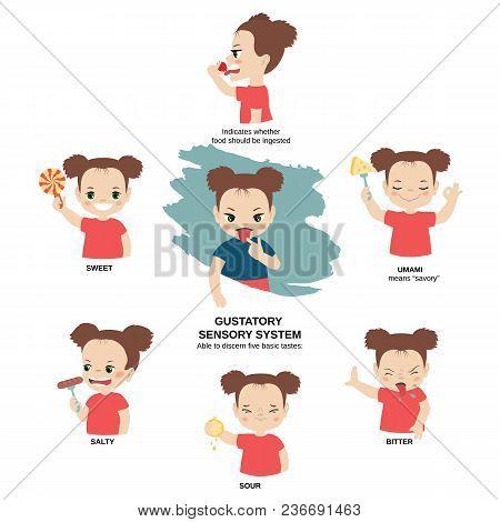 Vector Illustration Of Human Senses. Gustatory Sensory System: Able To Discern Five Basic Tastes - B
