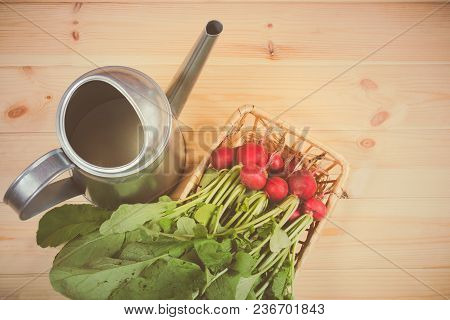 Fresh Garden Radish In Wicker Basket And Watering Can On Wooden Background. Top View.