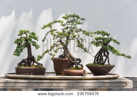 Four Bonsai Trees On A Table With A Bird In Baihuatan Public Park, Chengdu, China