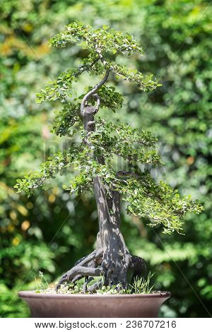 Bonsai Tree Against Green Background In Baihuatan Public Park, Chengdu, China