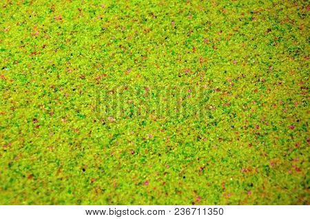 Texture Of A Colored Granular Sand Close Up. Yellow Grains