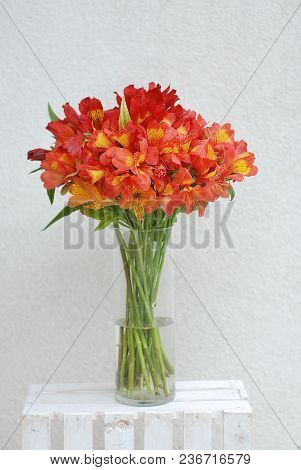 Red Orange Beautiful Alstromeria Lily Flower Bouquet Neutral Gray Wall Background. Toned. Spring Sum
