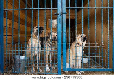 Dogs In The Cage In Animal Shelter