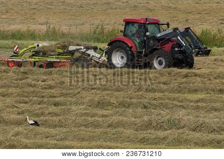June 2017, Lewitz, Germany, Stork Is Looking For Food In Front Of A Tractor On A Pasture