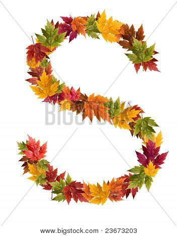 The letter S made from autumn maple tree leaves