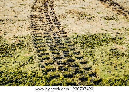 Off Road Car Tyre Track On Sandy Beach With Algae