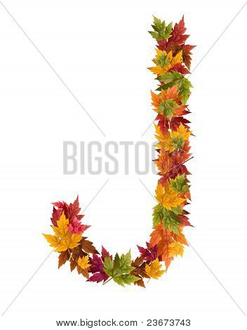 The letter J made from autumn maple tree leaves