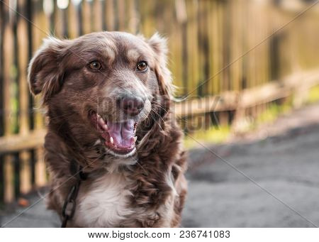 Close-up Portrait Of Beautiful Brown Smiling Dog Outside In Yard On Old Wooden Fence Blurred Backgro