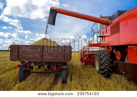 Tractor And Special Harvesting Equipment. Harvesting Of Wheat.