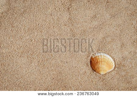 Golden Sandy Beach Travel Background With Single Shell At Lower Right.