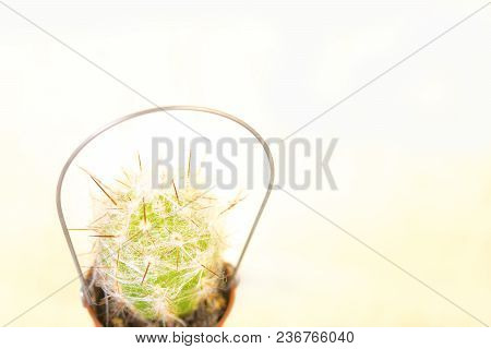 Green Small Cactus In A Small Bucket On A Pastel Yellow Background With Copy Space For Text