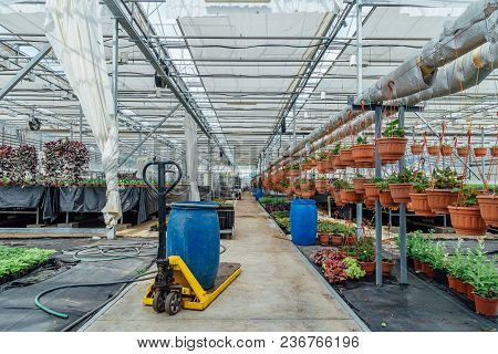 Ornamental Plants, Shrubs And Flowers Grown In Modern Hydroponic Greenhouse For Sell In Flower Marke